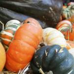 Harvest Time Info