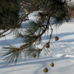 For the Birds – Pinecone Feeder