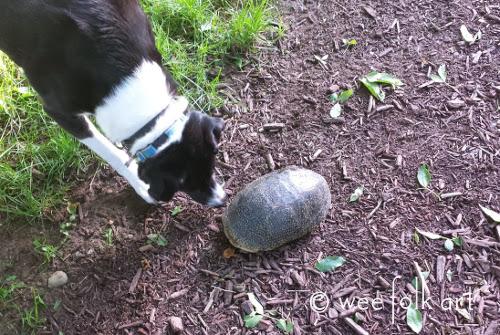 turtle turtle500