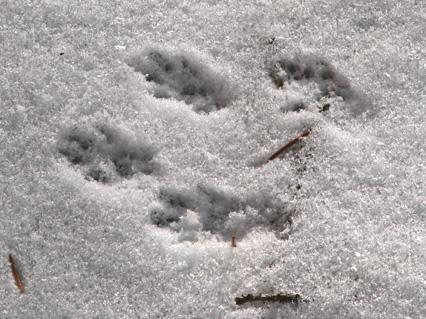dec08-snowtracks4