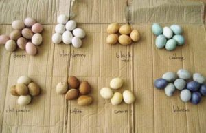 revolution from home- natural Easter egg dye recipes