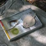 A Mouse in the Woods Bookmark
