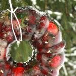 Frozen Fruit Ring Bird Feeder Directions